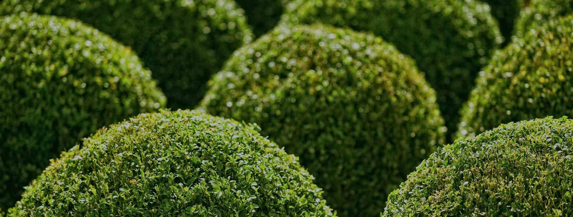 umweltfreundlich_nachhaltig_anbau_regionale_pflanzen_bayern