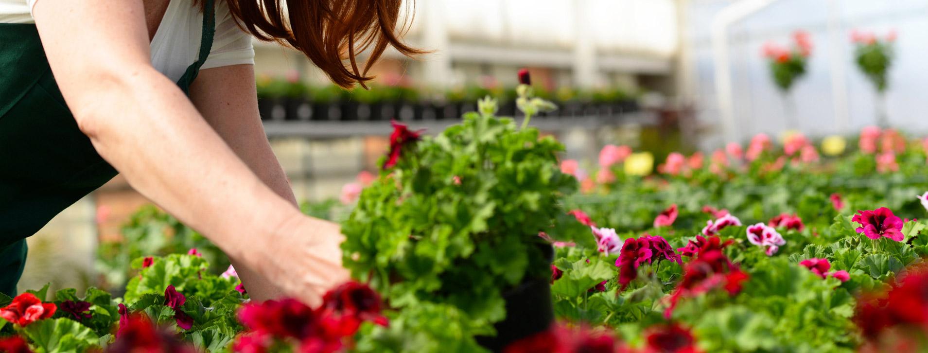 umweltfreundlicher_nachhaltiger_anbau_zierpflanzen_bayern